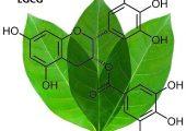 Chất EGCG là gì? Và EGCG có tác dụng ra sao đối với sức khỏe?