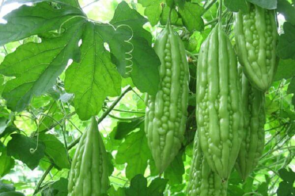 cac-loai-thuc-pham-phong-chong-benh-tieu-duong-1