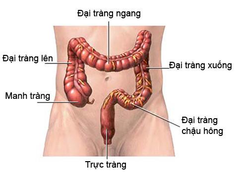 ung-thu-dai-trang2
